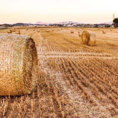 Kempston Agri